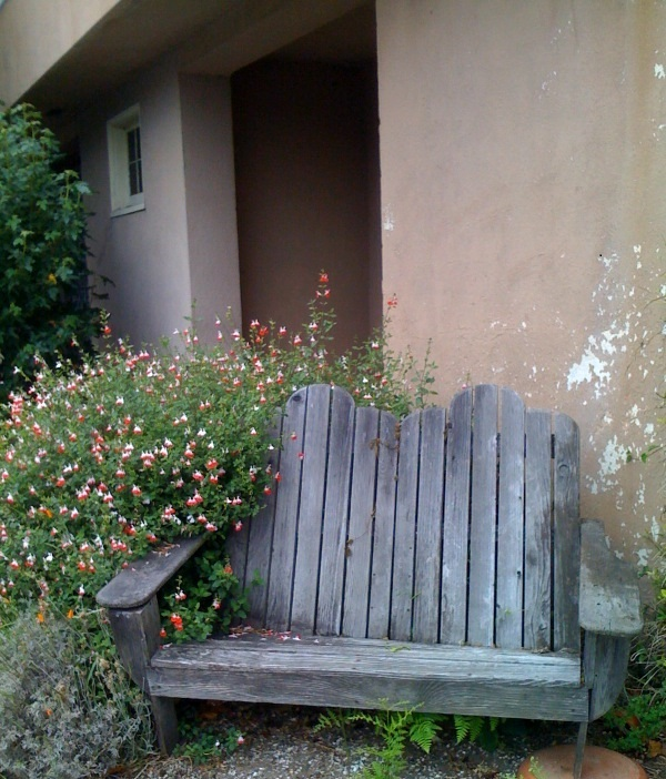 Bleeding hearts and bench
